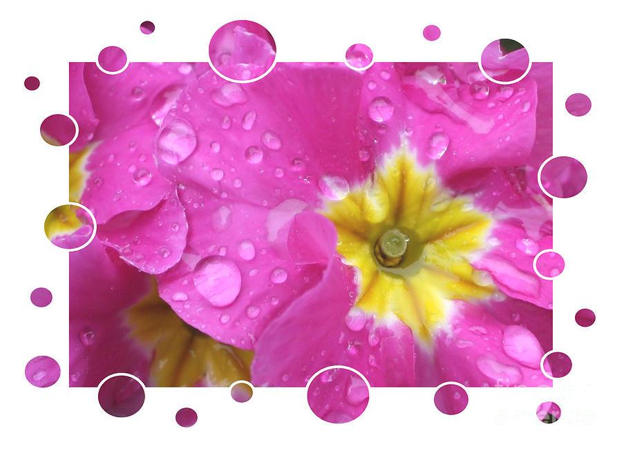 Fun Frames Photograph - Drops Upon Raindrops 3 by Carol Groenen
