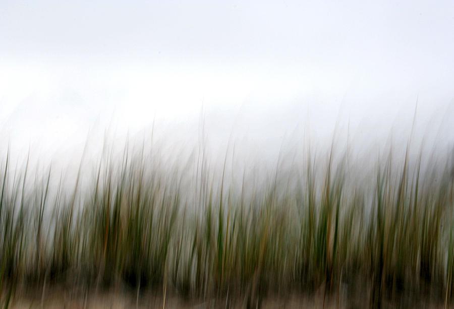 Grass Photograph - Dune Grass by Doug Hockman Photography