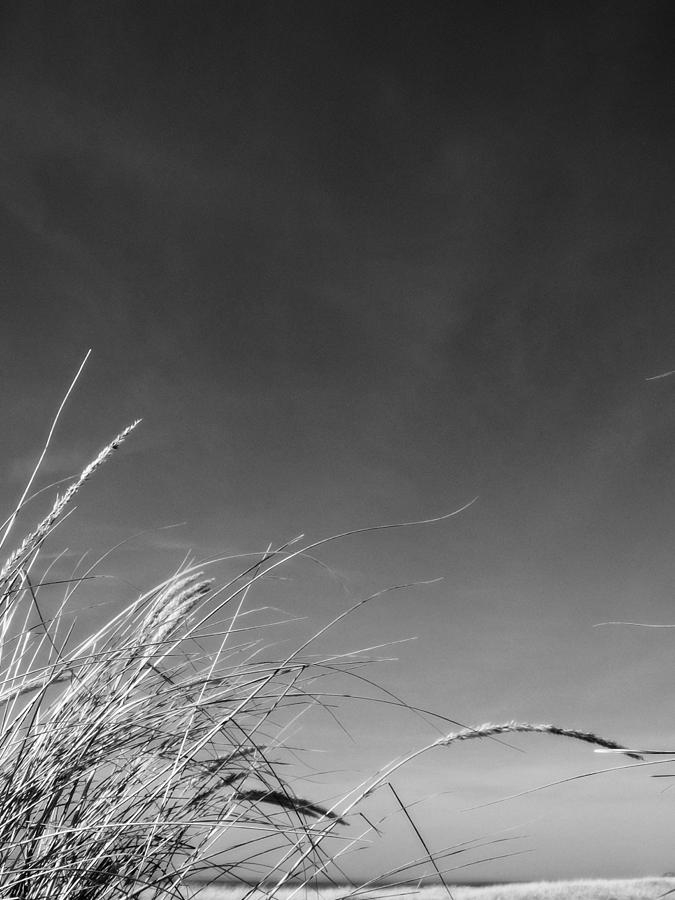 Dune Grass With Sky Photograph by Michelle Calkins