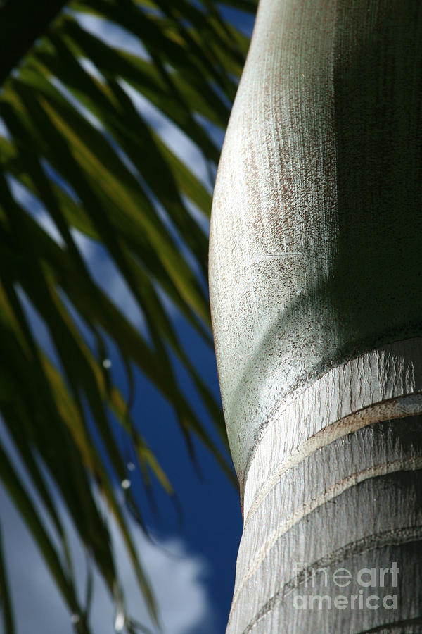 E Hawaii Aloha E Photograph