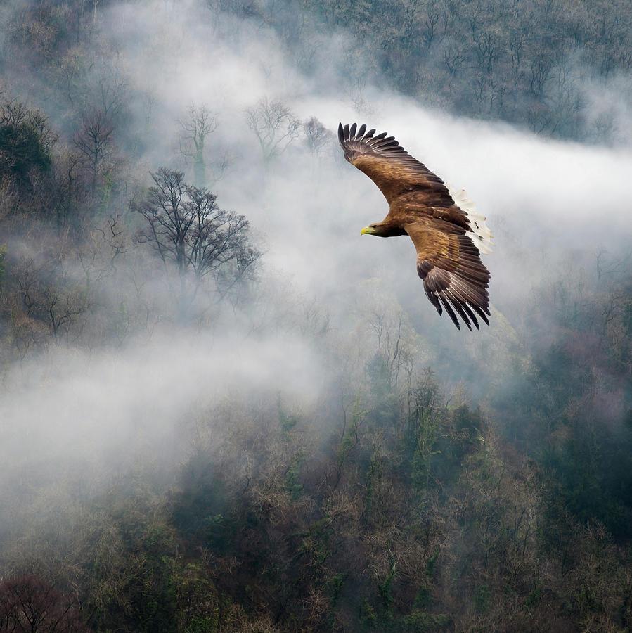 Ian David Soar Photograph - Eagles Dare by Ian David Soar