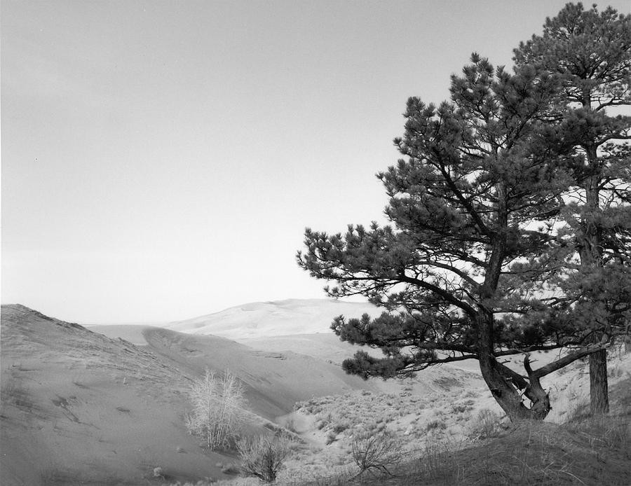 Edge Of The Dunes Photograph
