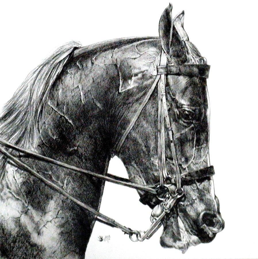 Horse Drawing - Effort by Barbara Keith
