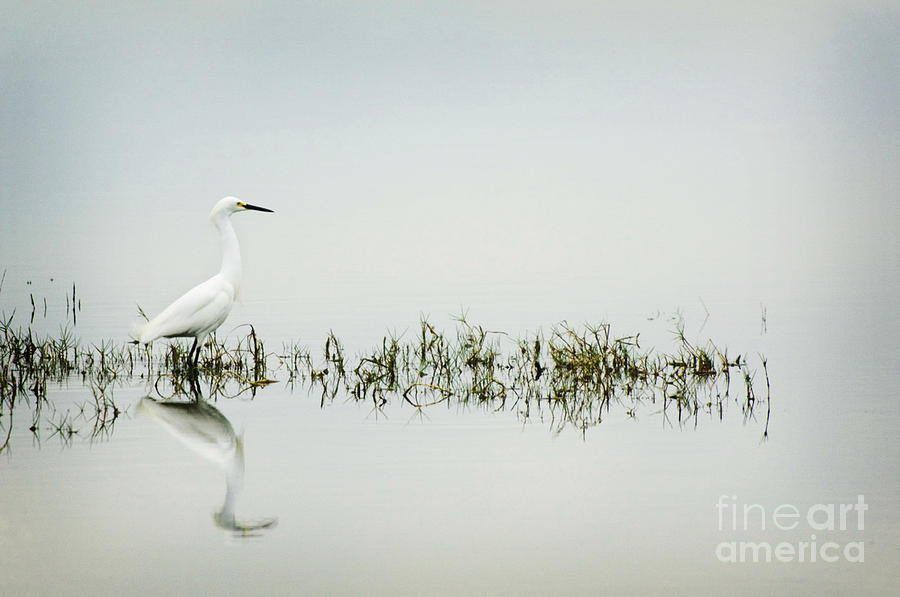Egret Photograph - Egret by Jim  Calarese