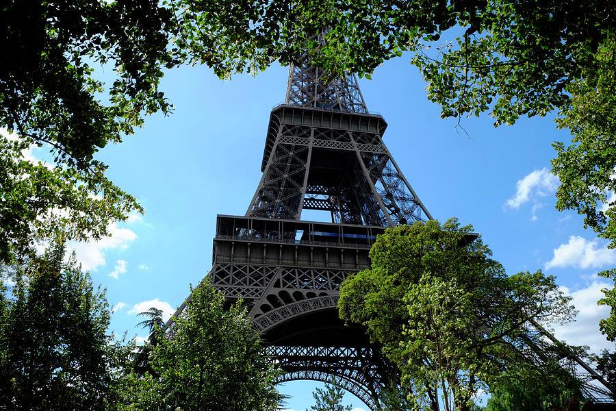 Eiffel Through Trees Photograph