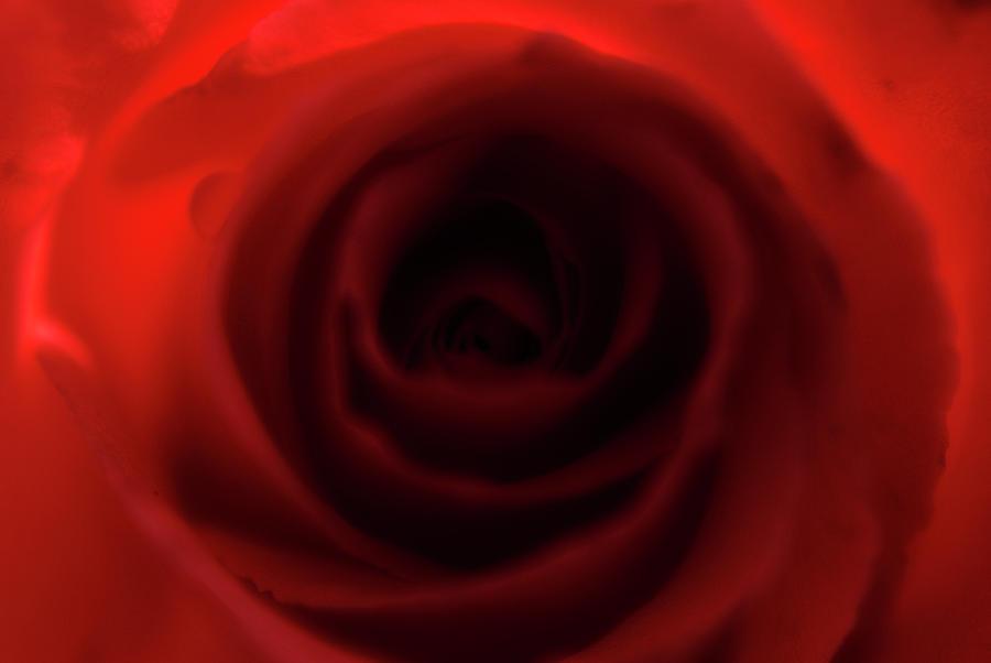 Rose Photograph - Elegant Rose by Bransen Devey