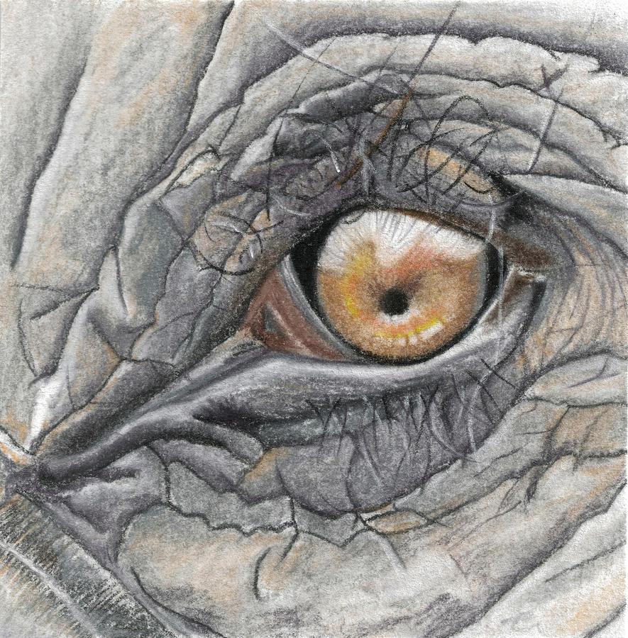 Elephant Eye - Big 5 Drawing By Cindy Earle