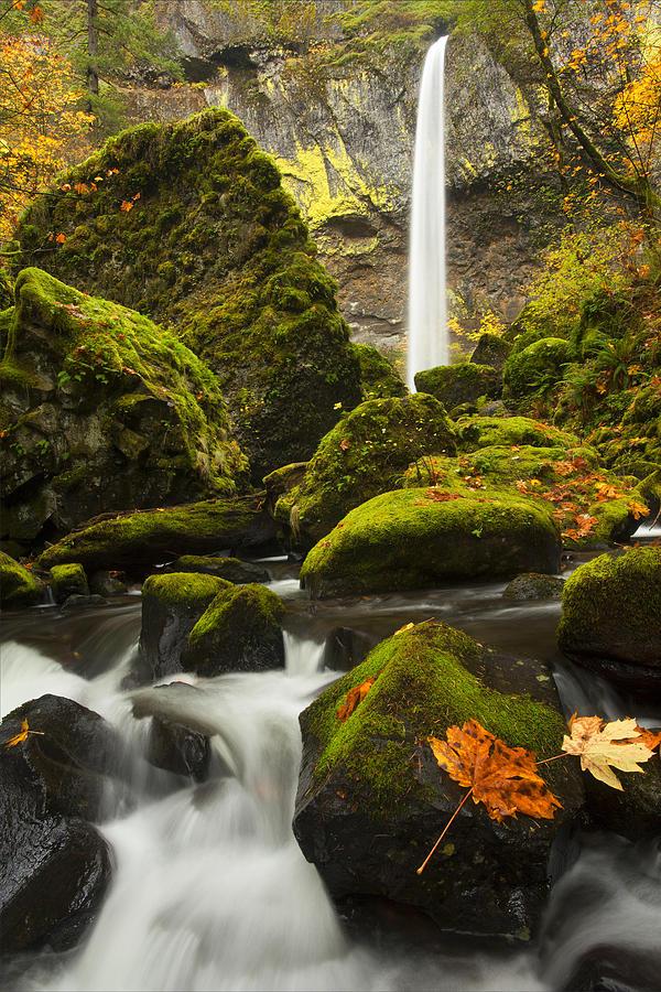 Elowah Falls Photograph - Elowah Autumn by Mike  Dawson