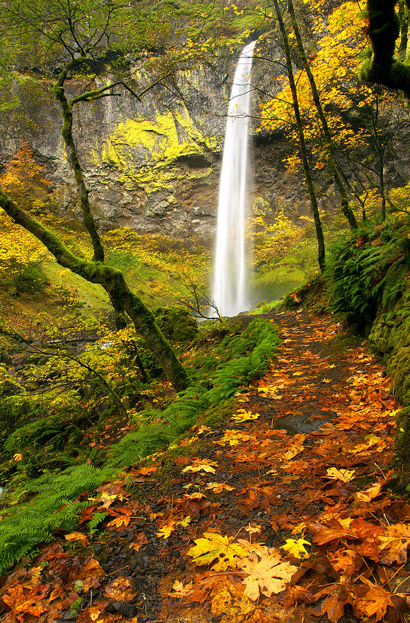 Elowah Falls Photograph - Elowah Autumn Trail by Mike  Dawson