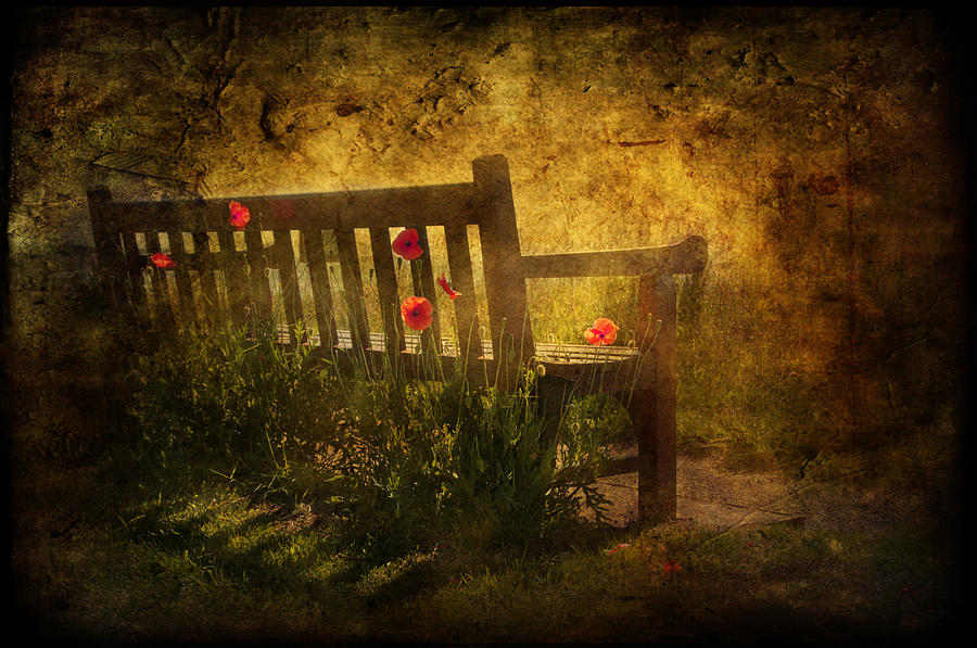 Empty Bench And Poppies Digital Art