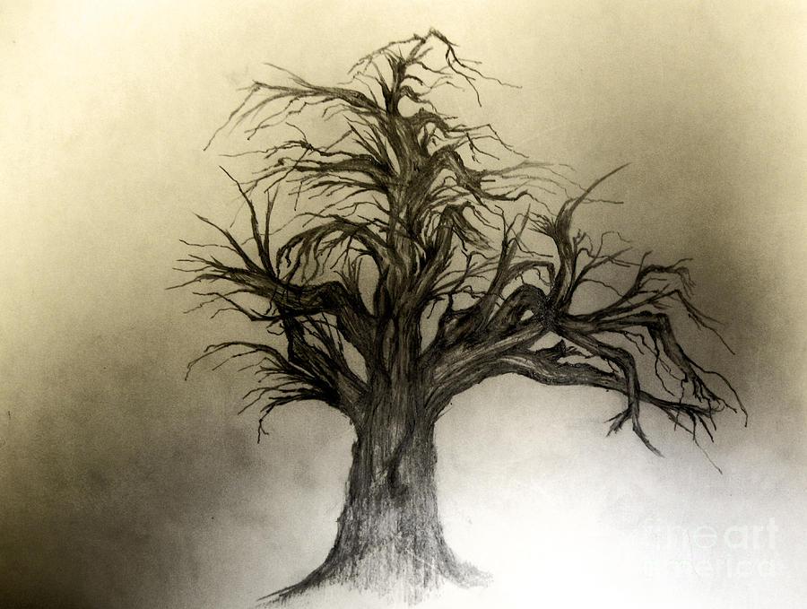 Tree Drawing - Enchanted by John Krakora