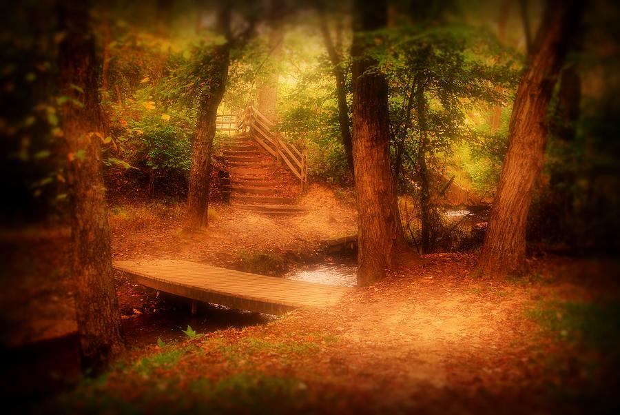 Enchanted Path - Allaire State Park Photograph