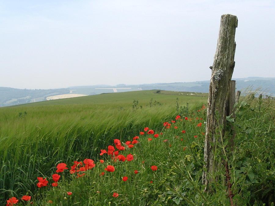 England Poppy Photograph - England Sussex Poppy Field by Yvonne Ayoub