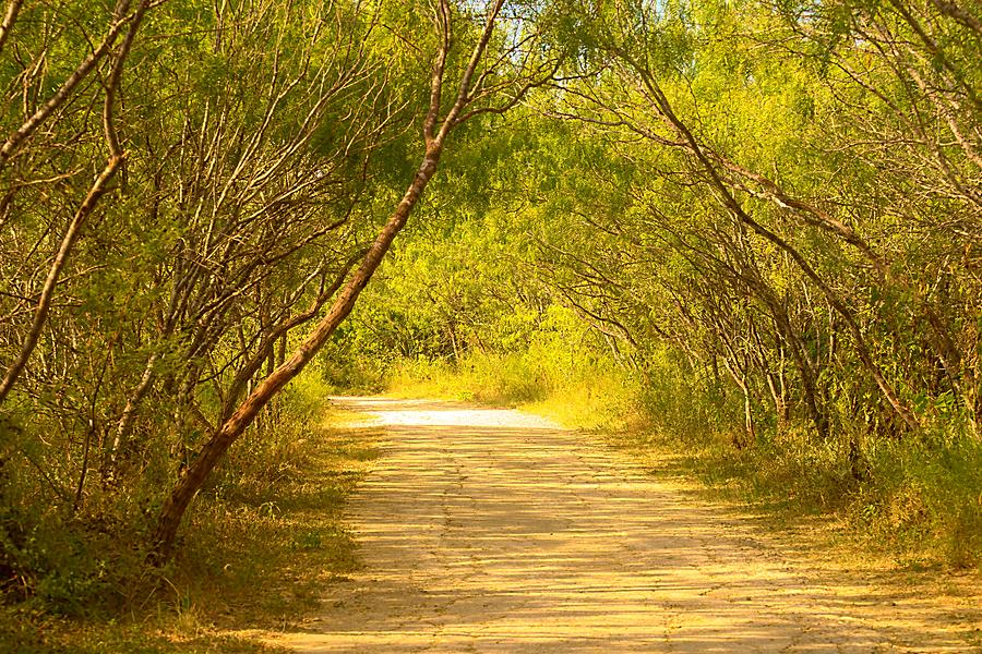 Enlightened Path by Daniel Nieves
