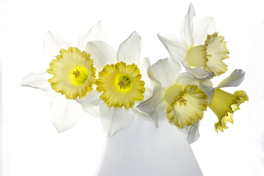 Daffodils Photograph - Ephifany by Rebecca Cozart