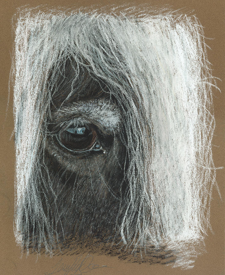 Pastel Fine Art Pastel - Equine Eye Detail by Terry Kirkland Cook