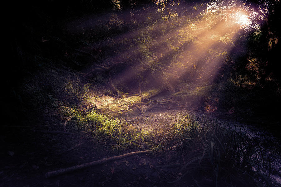 Ethereal Light Photograph