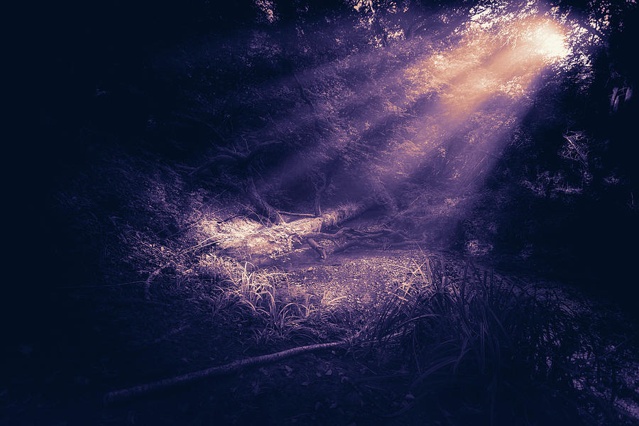 Ethereal Purple Photograph