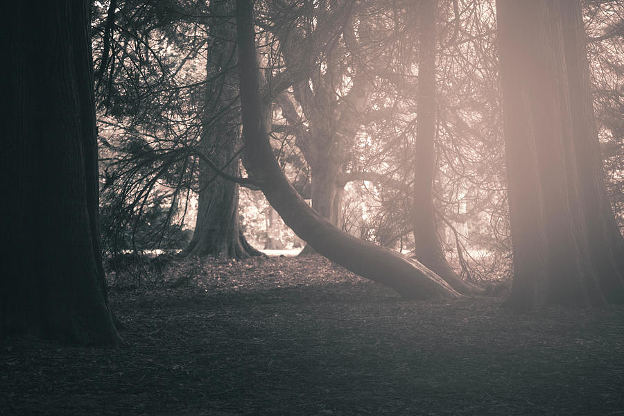 Ethereal Woods Photograph