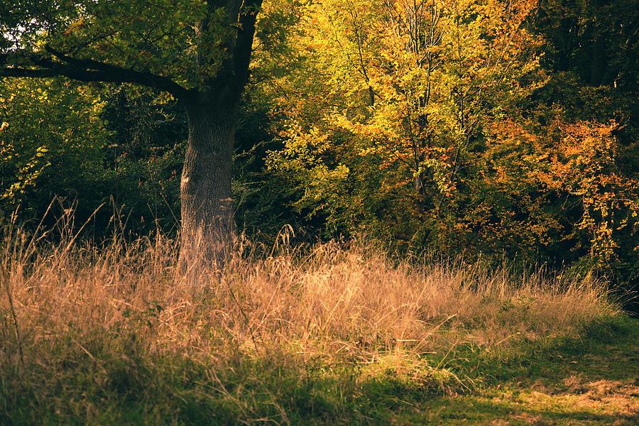 Evening Fall Photograph