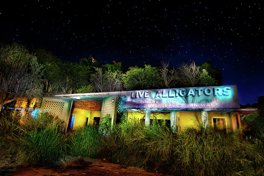 Everglades Gatorland Photograph