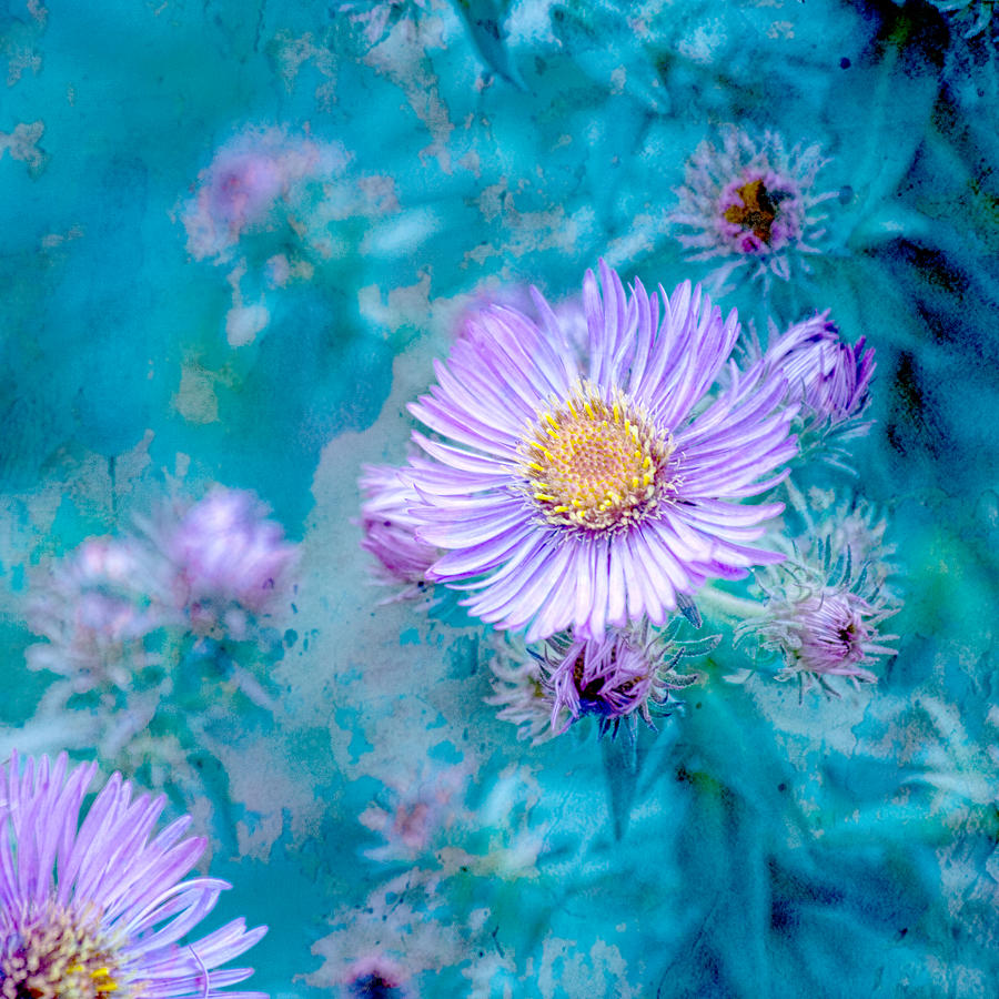 Lavender Flowers Photograph - Every Good Gift by Bonnie Bruno