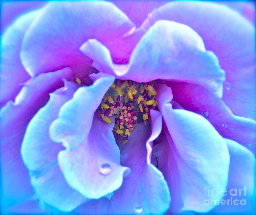 Photograph Of Rose Photograph - Exotic Dancer by Gwyn Newcombe