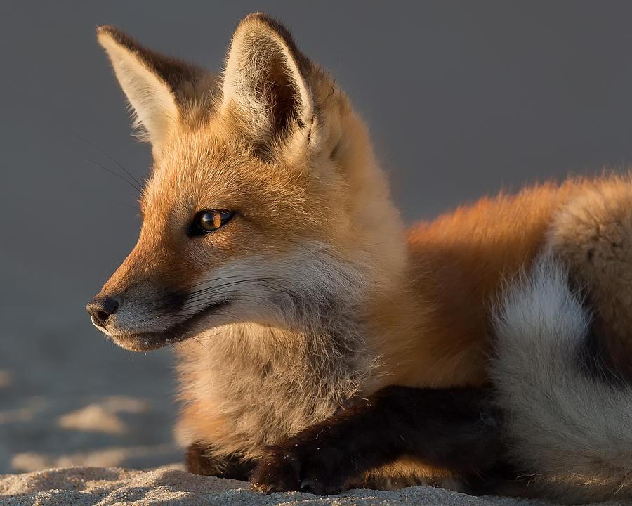 name fox eyes - photo #19