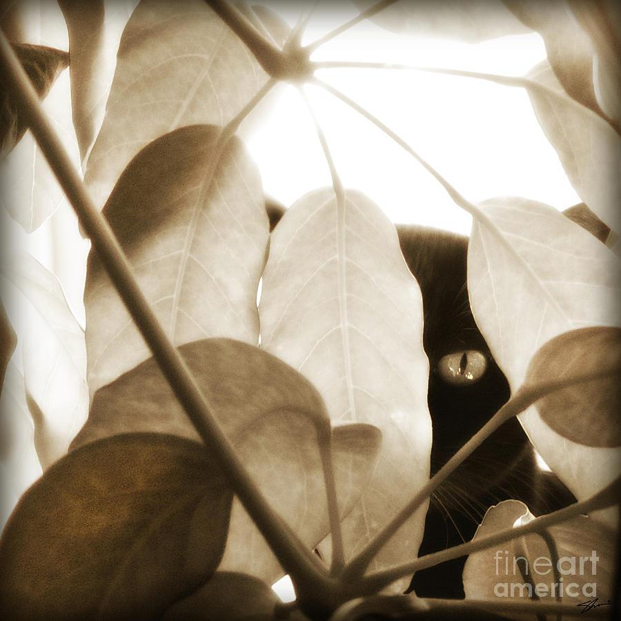 Cat Photograph - Eye Spy by Shevon Johnson