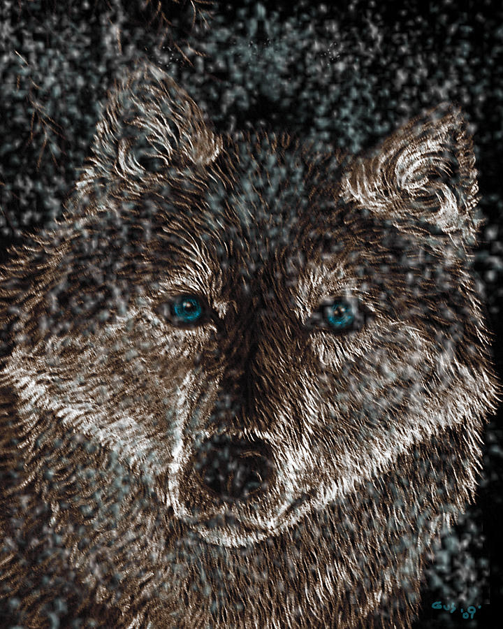 Eyes Of The Snow Wolf Drawing