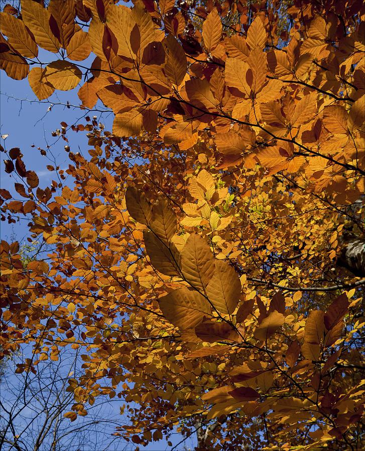 Fall Photograph - Fall 2010 51 by Robert Ullmann