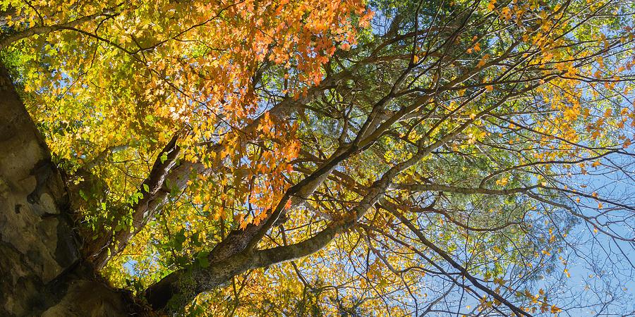 Fall Colors Above Dunbar Cave Photograph