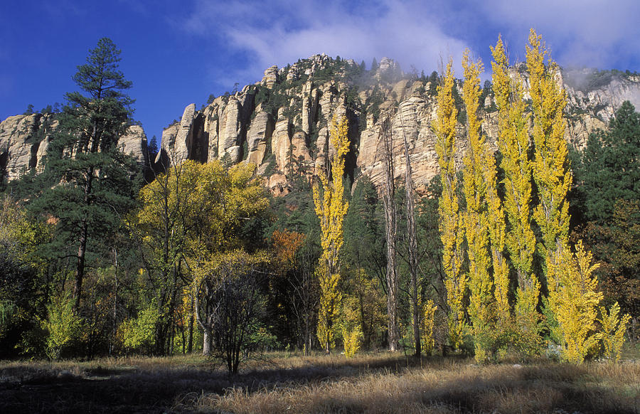 Buttes Photograph - Fall Colors And Red Rocks Near Cave by Rich Reid