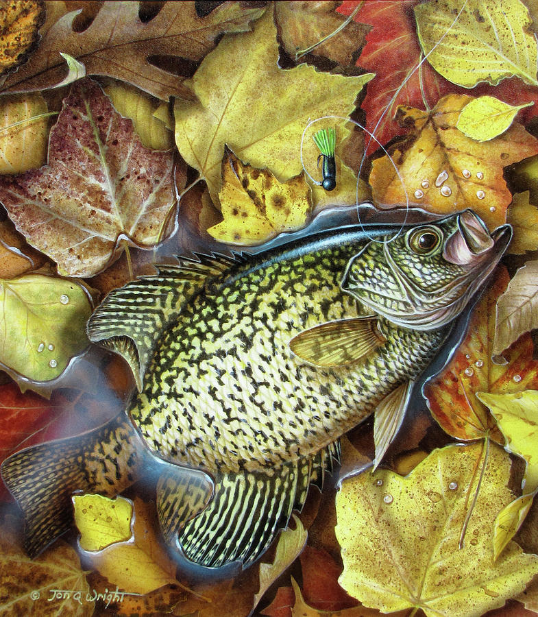Jon Q Wright Fish Fishing Crappie Panfish Fall Leaves Angling Lure Tackle Jig Painting - Fall Crappie by JQ Licensing