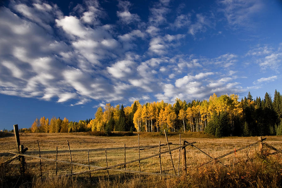 Fall In The Cariboo Photograph