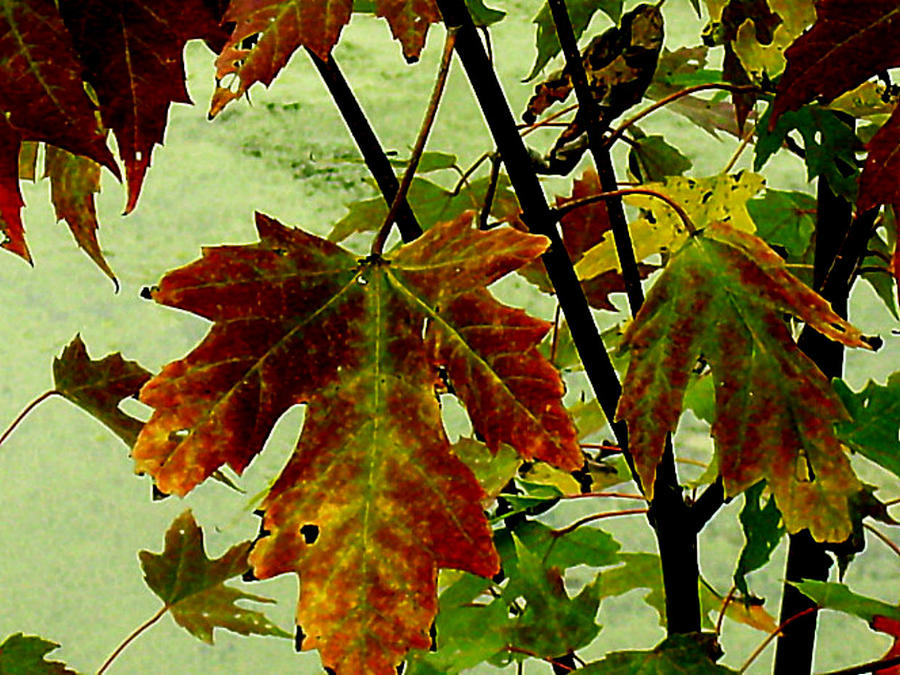 Fall Leaves Photograph - Fall Leaves by Julie Grace
