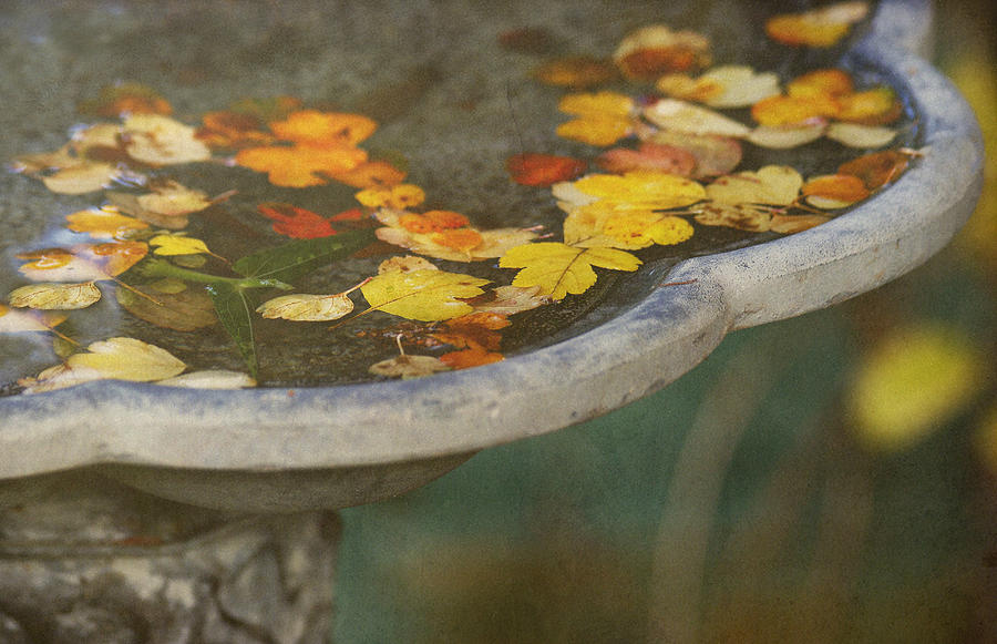 Fall Offering Photograph