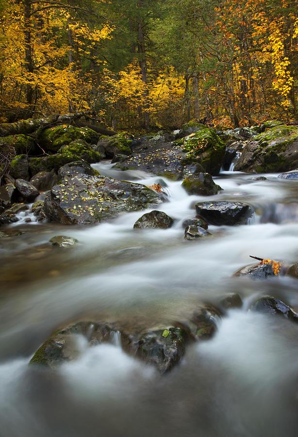 Stream Photograph - Fall Surge by Mike  Dawson