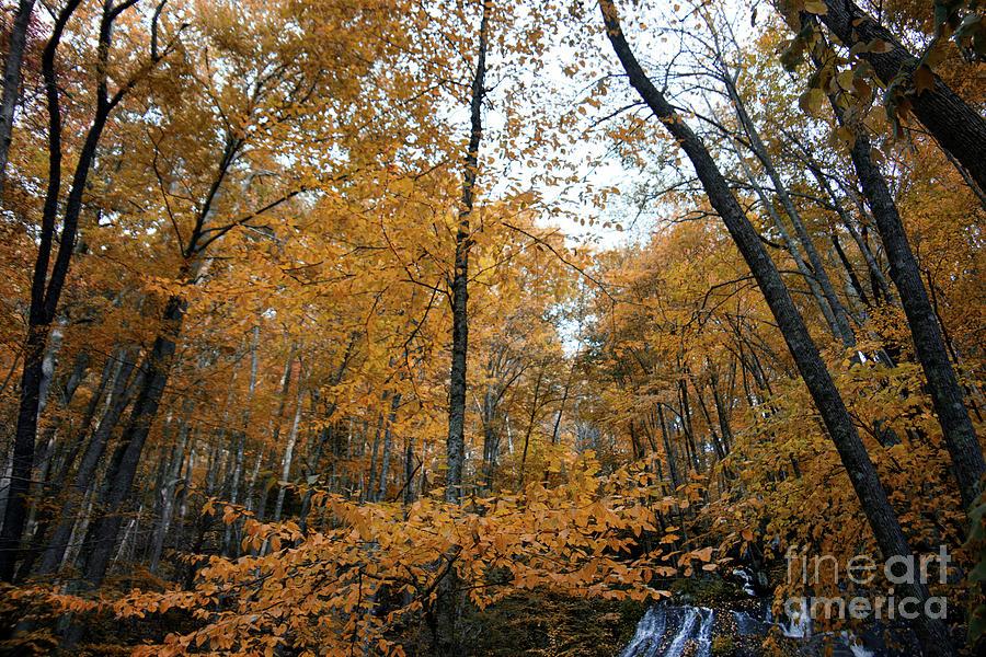 Fall Tees At  Yankee Horse Overlook Photograph