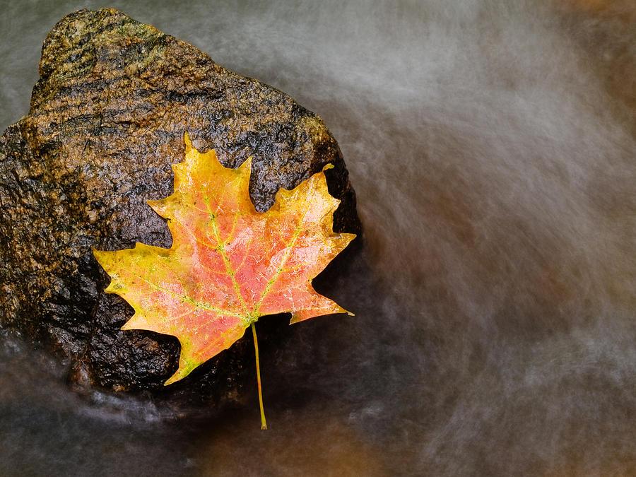 Leaf Photograph - Fallen Leaf by Jim DeLillo