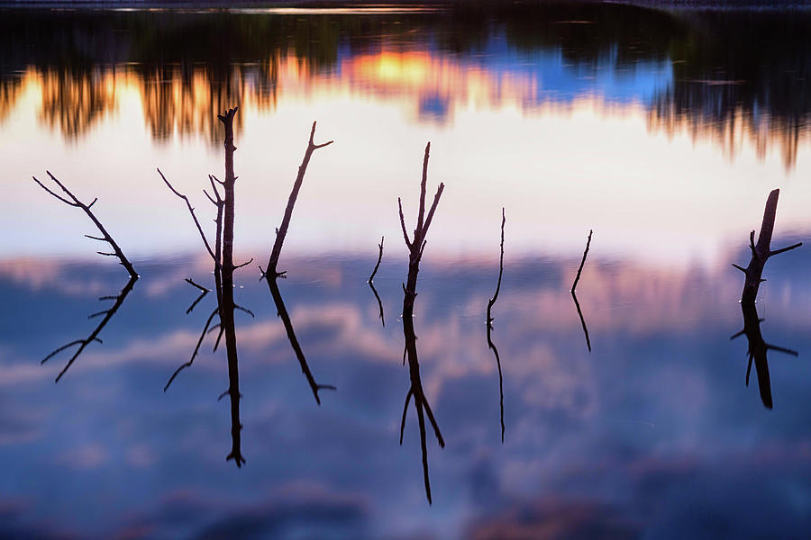 Fallen Twiggy Reflections Photograph