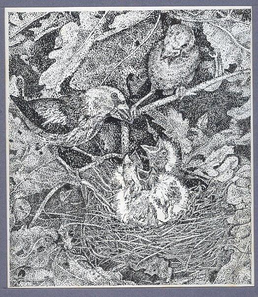 Birds Drawing - Family by Venkat Meruvu