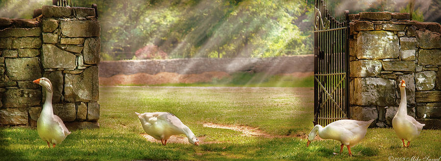 Savad Photograph - Farm - Geese -  Birds Of A Feather - Panorama by Mike Savad