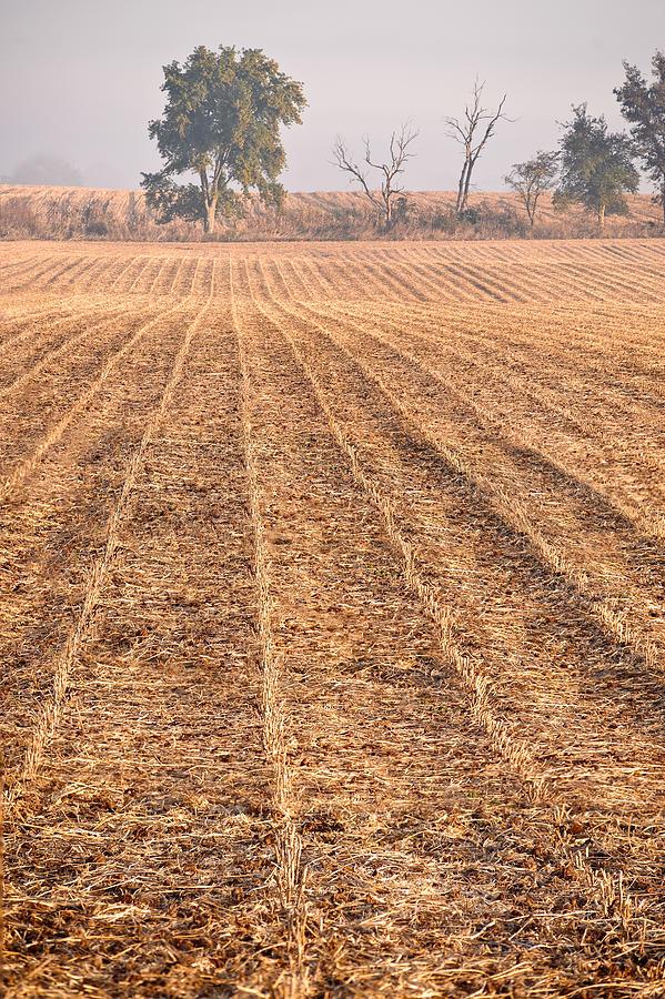 Corn Photograph - Farm Field Fog by Steve Gadomski