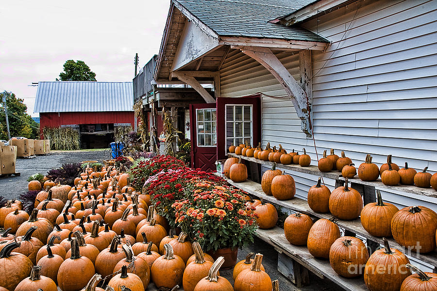 Farmstand Photograph