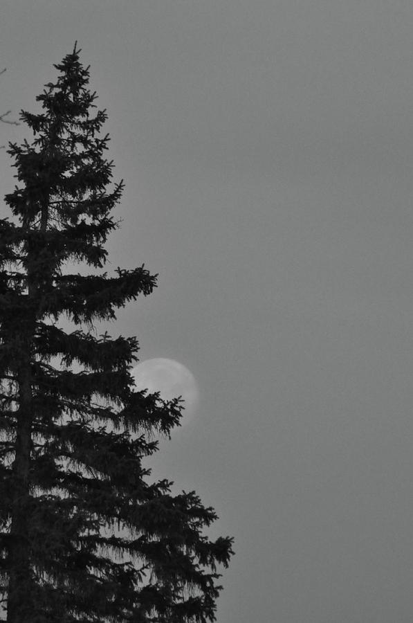 February Morning Moon Photograph