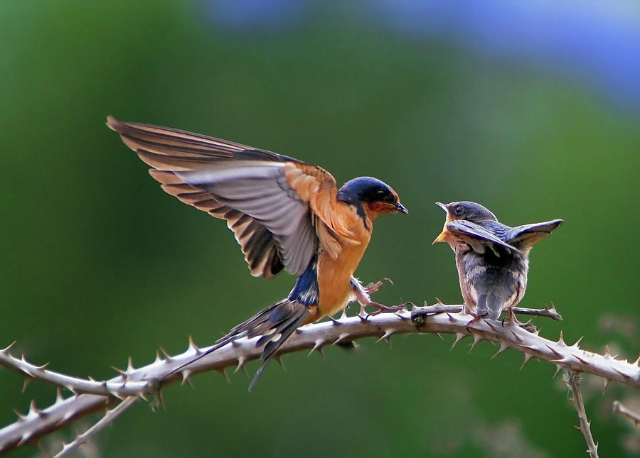 Birds Photograph - Feed Me by William Lee