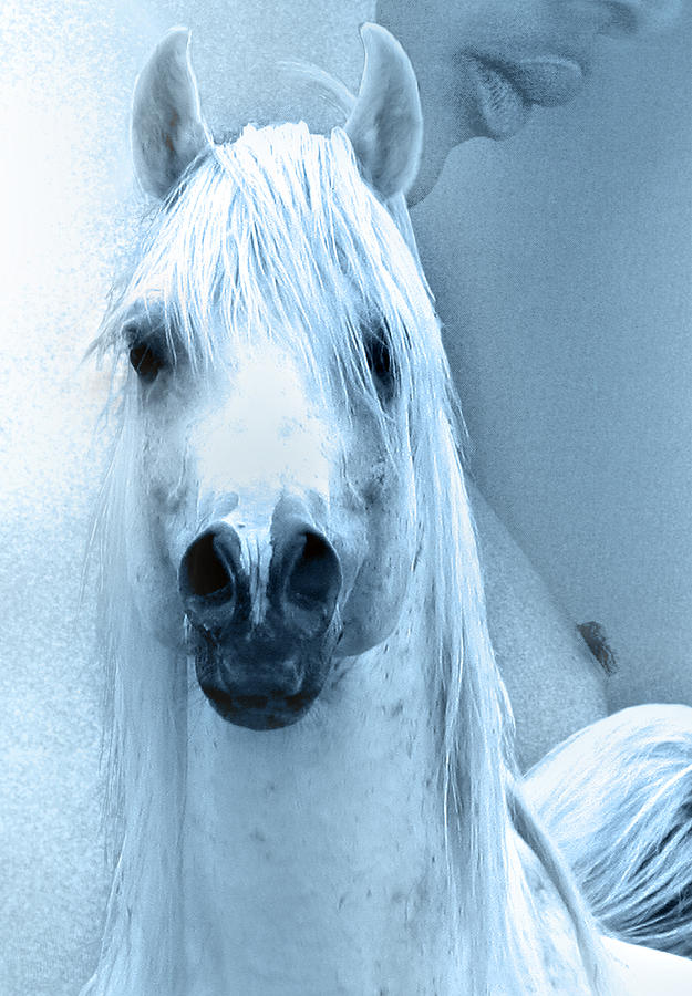 Female And Arabians Stallion Ink Photograph