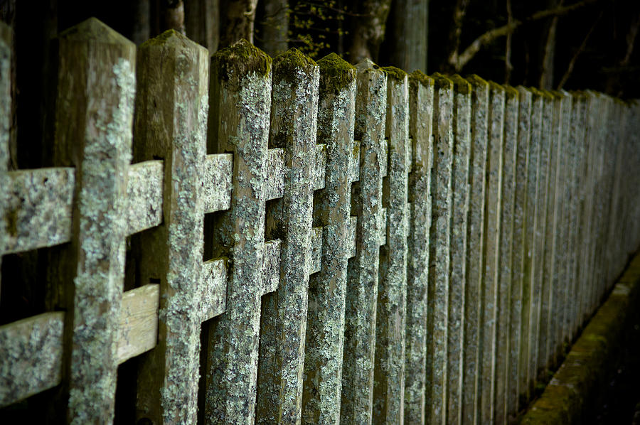 Fence Photograph - Fenced In by Sebastian Musial