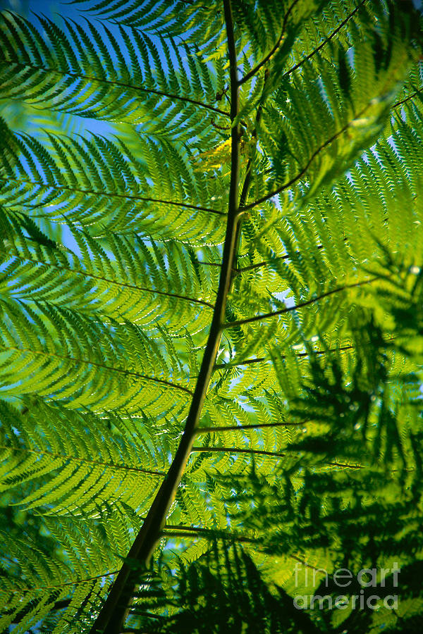 Afternoon Photograph - Fern Detail by Himani - Printscapes
